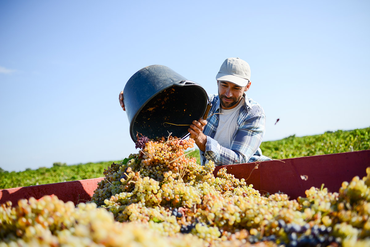 Découvrez les métiers du vignoble